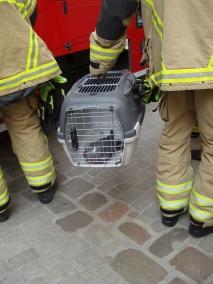 Gerettet! Toll gemacht von den Feuerwehrmännern! Sie retten, was zu retten ist. Prima!